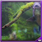 Red Belly Fish icon