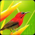 Relaxing Bird Sounds Ringtones : Bird Singing