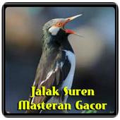 Jalak Suren Masteran Gacor icon