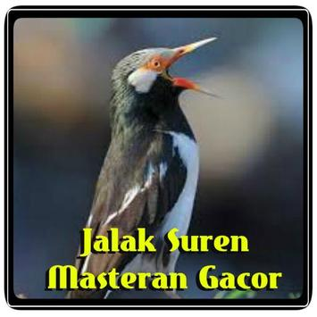 Jalak Suren Masteran Gacor poster