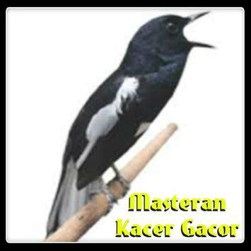 Masteran Kacer Gacor poster