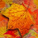 maple leaf live wallpaper APK