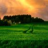 العشب LWP الخضراء أيقونة