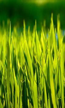 moving grass wallpaper poster