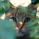 LWP القطط APK