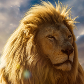 moving lion wallpapers icon