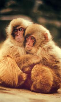 baby monkey live wallpaper poster