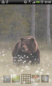 grizzly bear wallpapers apk screenshot