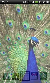 peacock live wallpaper screenshot 3