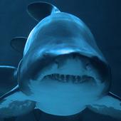 أسماك القرش LWP أيقونة