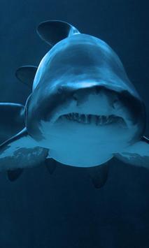 أسماك القرش LWP الملصق