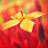 beautiful flowers wallpapers icon