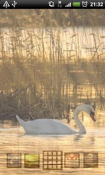 swan wallpapers screenshot 3