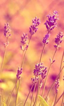 wallpaper lavender poster