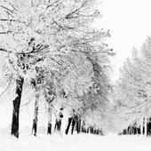 winter season wallpaper icon