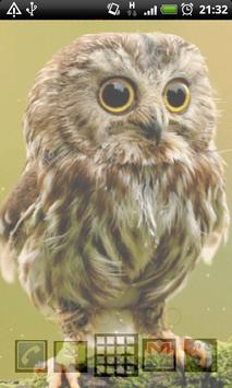 cute owl live wallpaper apk screenshot