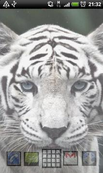 white tigers wallpaper screenshot 3