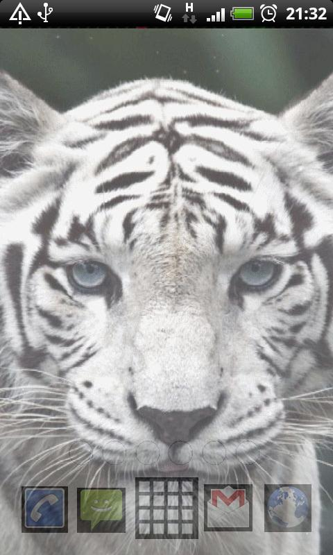 white tigers wallpaper apk download free personalization