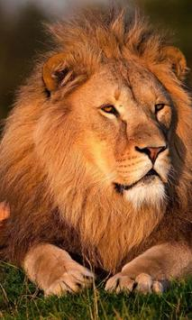 king of lion backgrounds poster