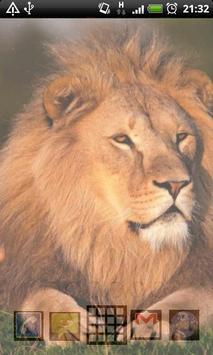king of lion backgrounds apk screenshot