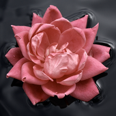 Flower Floating On Water LWP icon