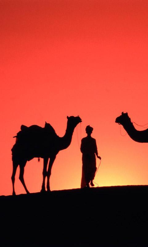 Camel Live Wallpaper For Android Apk Download