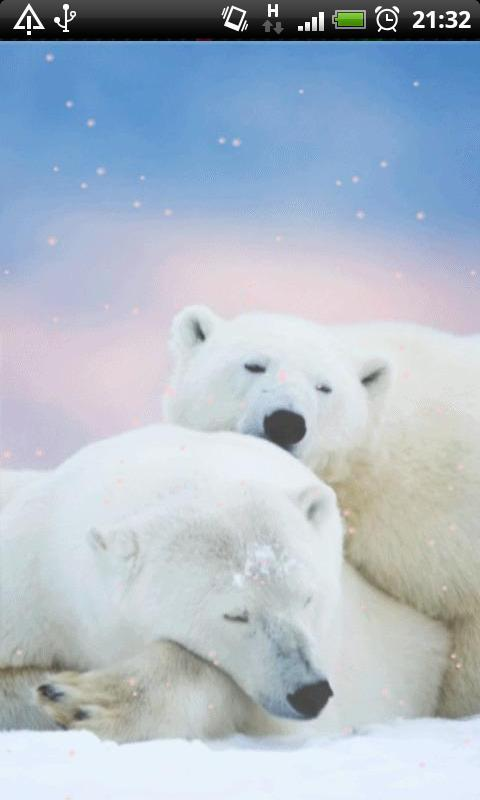 Polar Bear Wallpaper For Android Apk Download