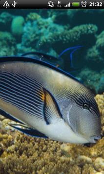 Red Sea Fish Live Wallpaper screenshot 3
