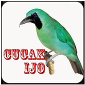 Masteran Burung Cucak Ijo icon