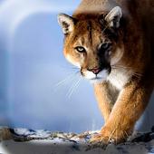Awesome Puma  Live Wallpaper icon