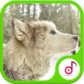 Best Of Wolf Sound & Ringtone Free icon