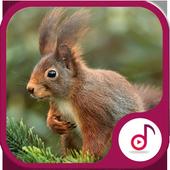Best Squirrel Sound icon