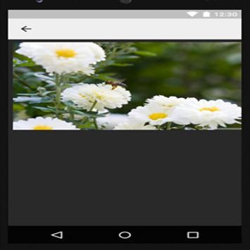 Beautiful Flower Wallpaper apk screenshot