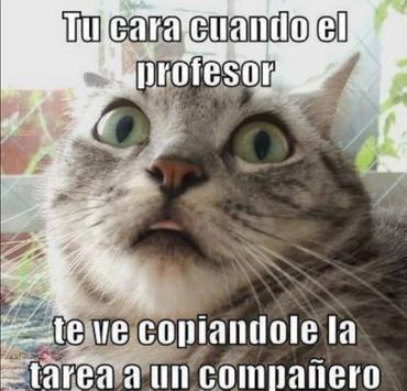 Imagenes Graciosas - Pro poster
