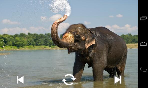 Animal Sounds (Book) apk screenshot