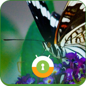 Butterfly Wall & Lock icon