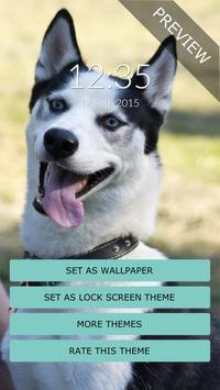 Cute Husky Wall & Lock apk screenshot