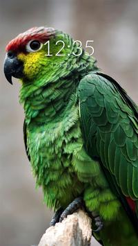 Green Parrot Wall & Lock poster
