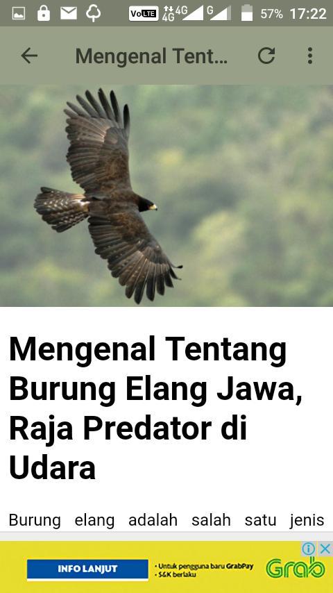 8200 Gambar Hewan Burung Elang Jawa Terbaik