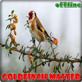 Goldfinch Master Offline icon