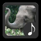 Elephant Sounds icon