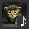 Kitten Sounds icon