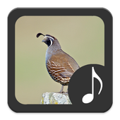 Quail Sounds icon