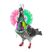 The Camden Fringe 2012 icon