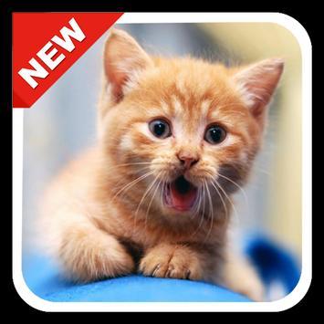 300 Cute Kitten Wallpapers HD Poster