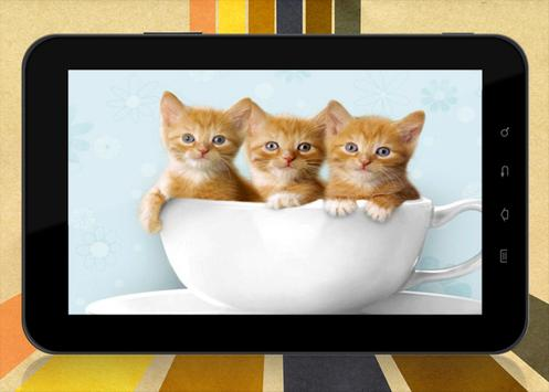 300 cute kitten wallpapers hd for android apk download 300 cute kitten wallpapers hd screenshot 4 thecheapjerseys Gallery