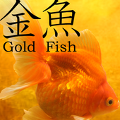 Gold Fish 3D free LWP icon
