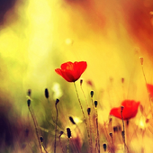 Flower Pictures Wallpapers icon
