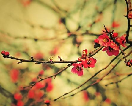 Flower Pictures Wallpapers apk screenshot