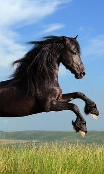 Horse Wallpapers HD apk screenshot